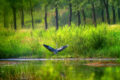 河湖整治资质